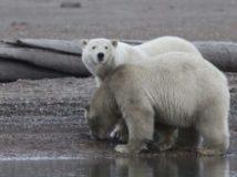 Divlja Aljaska dokumentarni film gledaj online